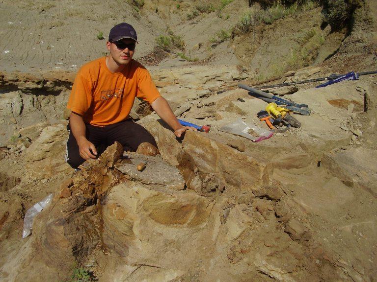 """Odkrývání částečně zachované postkraniální kostry subadultního jedince edmontosaura, exemplář přezdívaný """"Tom´s Duck"""". Byl objeven nedaleko přehradní nádrže Fort Peck na východě Montany. Toto mládě mohlo být asi 6 metrů dlouhé a zahynulo přibližně 30"""