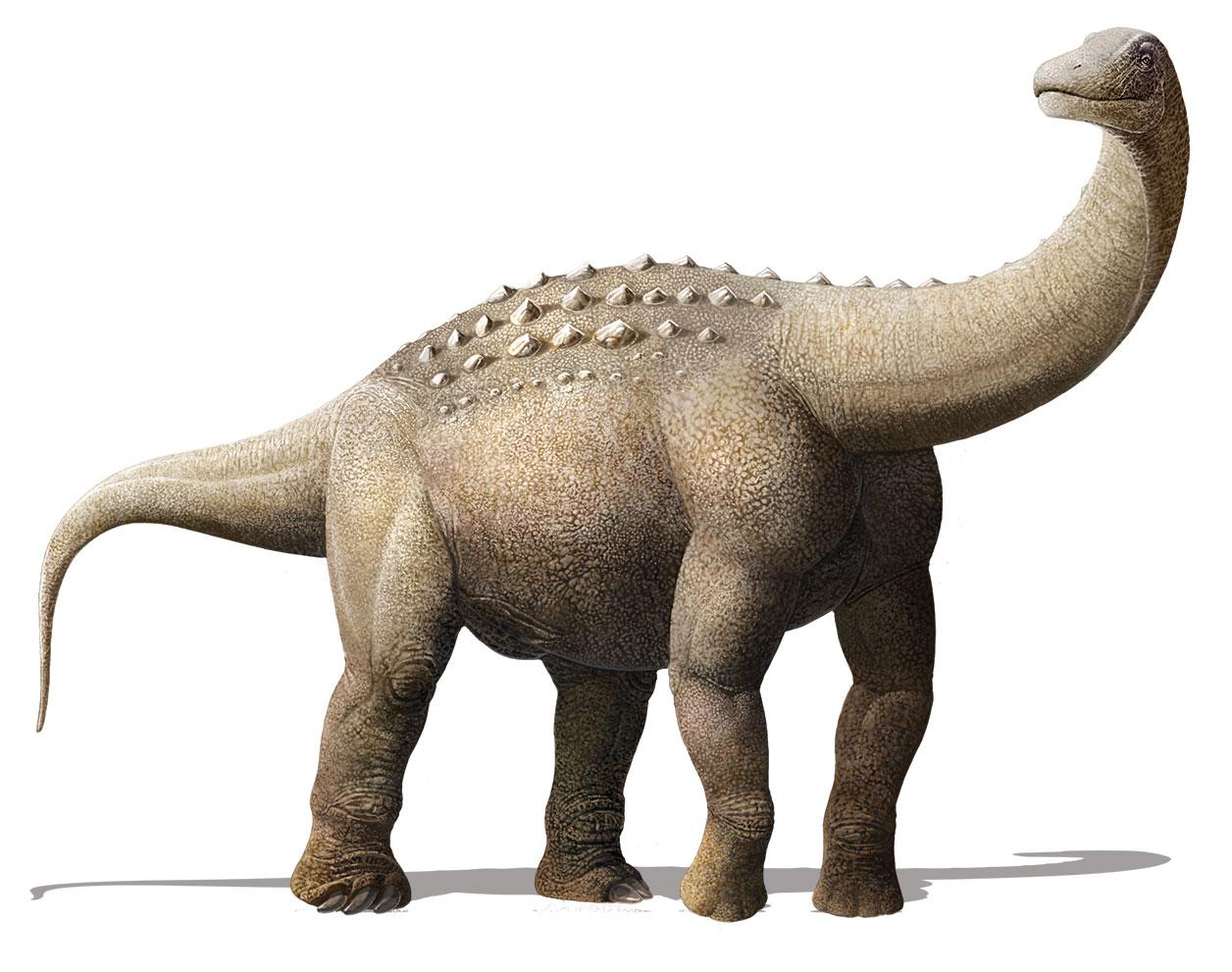 Titanosaurní sauropod druhu Yamanasaurus lojaensis, formálně popsaný roku 2019 z ekvádorského souvrství Río Playas. Tento zástupce čeledi Saltasauridae se stal prvním neptačím dinosaurem popsaným ze zmíněného státu a při svém stáří 66,9 milionu let p