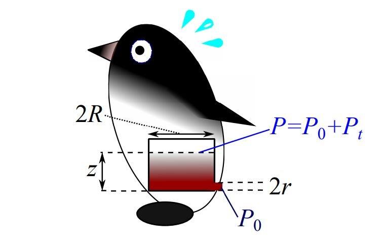 Model použitý k výpočtům. Kredit:  Credit: arXiv:2007.00926 [physics.bio-ph]