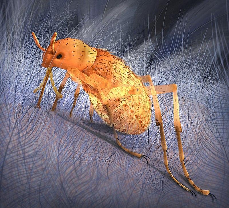 Rekonstrukce přibližného vzezření parazitického hmyzu druhu Pseudopulex jurassicus, vzdáleně příbuzného dnešním blechám. Tito až 3 centimetry dlouzí parazité opeřených dinosaurů a jiných obratlovců žili na území Číny v období střední jury (asi před 1