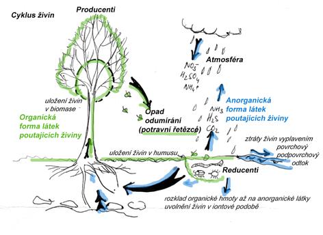 Obrázek 1 Koloběh látek v přírodě. Obdobně stručné popisy koloběhu látek v přírodě najdete v učebnicích přírodopisu už na základních školách. (zdroj  ZDE)