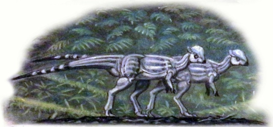 Rekonstrukce přibližného vzezření malého pachycefalosaurida druhu Sphaerotholus buchholtzae, jednoho z posledních známých neptačích dinosaurů. Spolu s dalšími zástupci tzv. lancijské fauny se stal přímou obětí katastrofického vymírání na konci křídy