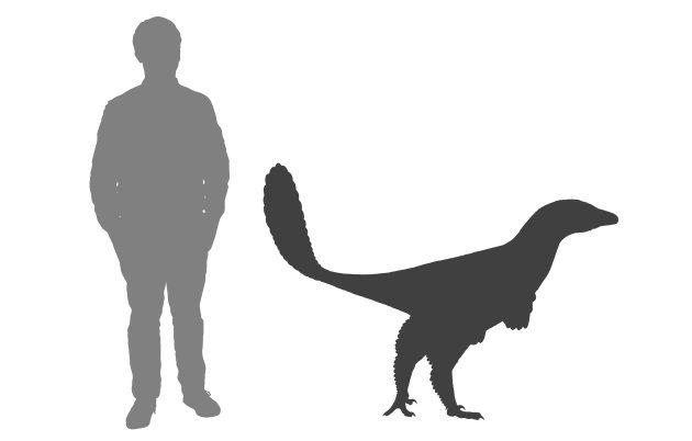 Albertavenatoři byli relativně malí teropodi, dosahující délky dvou až tří metrů a hmotnosti zhruba kolem 50 kilogramů. Ačkoliv žádné fosilní otisky opeření nebyly objeveny, je prakticky jisté, že i tento druh byl vybaven bohatým pernatým integumente