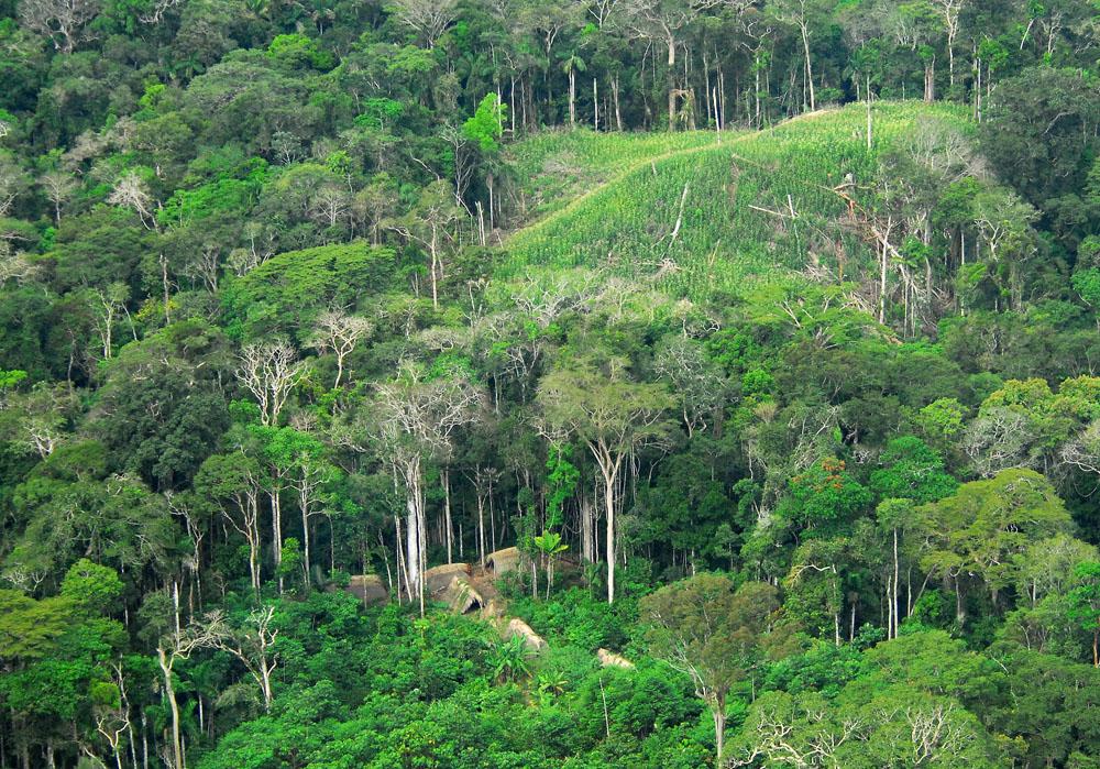 Amazonský prales (na snímku oblast v brazilském státě Acre) připravil klimatologům překvapení. Kredit: Gleilson Miranda / Governo do Acre / Wikipedia