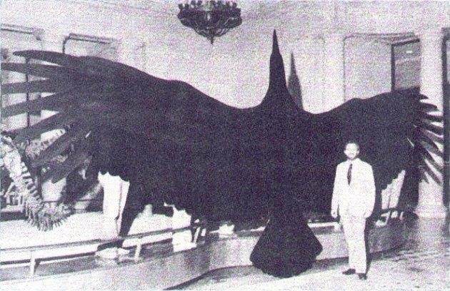 Model argentavise v porovnání s velikostí dospělého člověka. Jako srovnání posloužil sám jeden z dvojice autorů vědeckého popisu tohoto pravěkého ptáka, Dr. Kenneth E. Campbell z Muzea přírodní historie v Los Angeles. Obřího teratorna formálně popsal