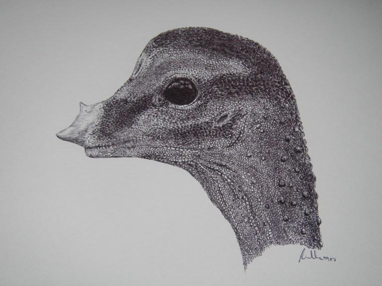 Obrazová rekonstrukce hlavy dosud nevylíhnutého sauropodího embrya. Tak nějak vypadal ještě nenarozený titanosaurní sauropod, který se zhruba před 80 miliony lety chystal k prvním krůčkům po nebezpečných křídových pevninách tehdejší Patagonie. Délka