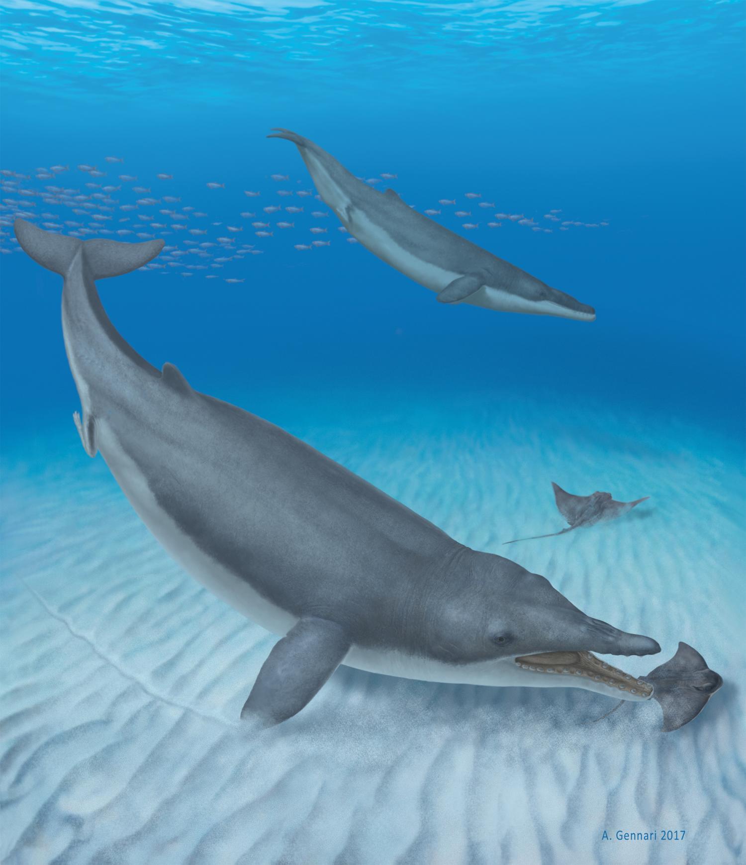 Ilustrace tvora Mystacodon selenensis, který kdysi brázdil pobřežní vody dnešního Peru. Credit: Alberto Gennari
