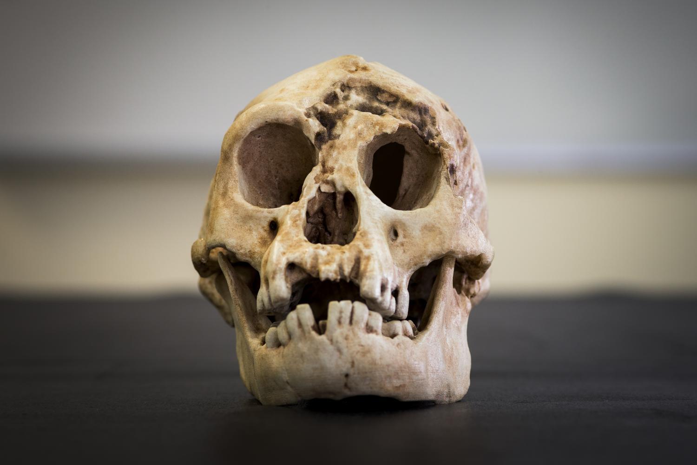 Rekonstruovaná lebka hobita. Kredit: Stuart Hay, ANU.