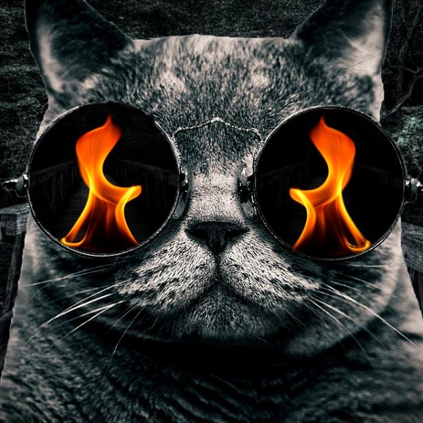 Jsou už na dohled kvantové kočky? Kredit: stevewoods69 / deviantart.