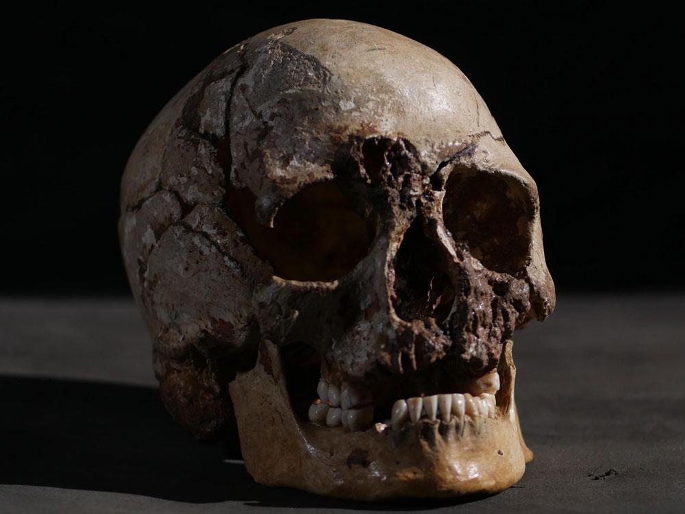 Lebka Čedarského muže, která skeneru bratrů Kennisových stála modelem. Kredit: UCL