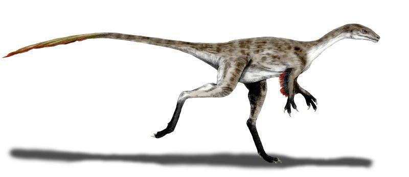 Rekonstrukce možné podoby menšího štíhlého teropoda druhu Coelurus fragilis. Tento malý predátor z ekosystémů morrisonského souvrství byl formálně popsán již roku 1879, v době tzv. Válek o kosti mezi znesvářenými profesory Copem a Marshem. Myšlenka,