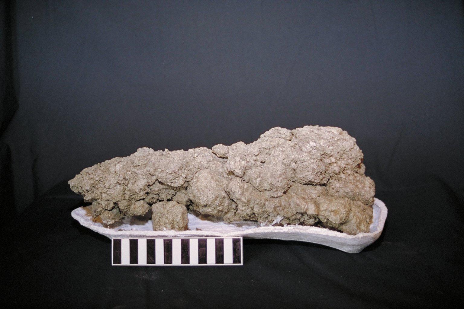 Fosilizovaný trus (koprolit) obřího pozdně křídového teropoda, objevený v sedimentech souvrství Frenchman na území kanadské provincie Saskatchewan. Téměř s jistotou se jedná o koprolit, jehož původcem byl proslulý teropod druhu Tyrannosaurus rex. Kre