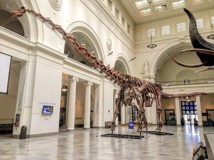 Dokonce i tak obří titanosauři, jako byl přes 37 metrů dlouhý a kolem 70 tun vážící Patagotitan mayorum (v expozici Field Museum of Natural History v Chicagu) by byli takřka drobečci ve srovnání s indickým bruhathkayosaurem. Pokud ovšem jeho fosilie