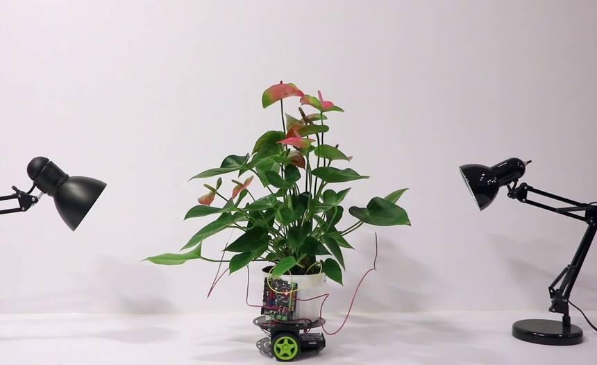 Fyto-kyborg z dílny MIT Media Lab