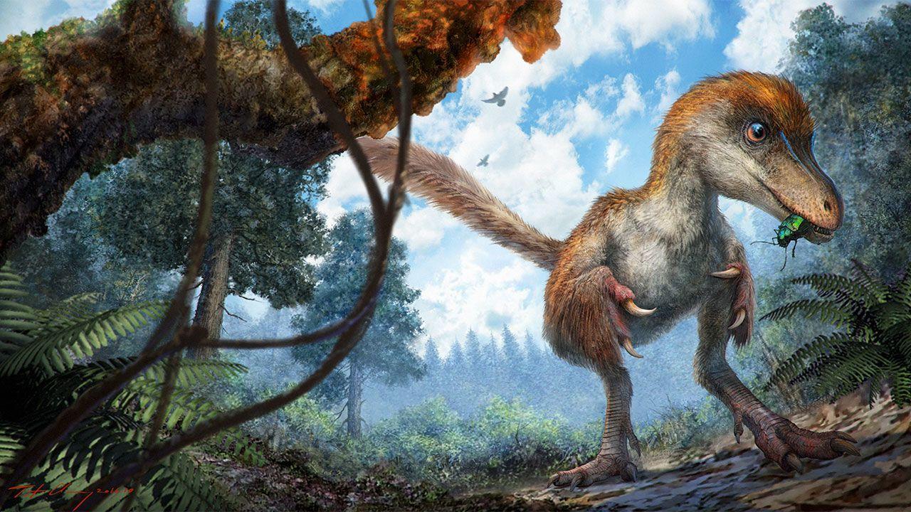 Malý maniraptorní teropod, který po sobě brzy zanechá významnou stopu v podobě ocásku, zalitého křídovou pryskyřicí a dochovaného v podobě jantaru až do naší současnosti. Teprve za několik milionů let se bude po vzdálené mořem