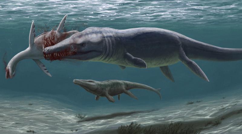 Rekonstrukce raně křídového moře na Novojičínsku. V popředí velký plesiosuchin požírající mršinu mladého dlouhokrkého plesiosaura. Vzadu proplouvá příbuzný torvoneustů. Autorkou rekonstrukce je Edyta Felcyn. Práva k rekonstrukci vlastní Daniel Madzia