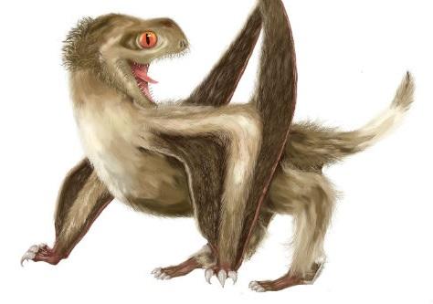 Poblíž míst, kde dnes stojí hlavní město Čínské lidové republiky, proháněli pterosauři porostlí peřím. Převážně byli hnědí. Reconstrukce: Yuan Zhang.