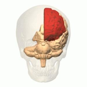 Lobotomie(z řečtiny lobos (mozkový lalok) tome (řez)) je operativní neurochirurgický zákrok, při kterém jsou přerušena nervová vlákna spojující mozkový lalok s ostatními částmi mozku. Lebka