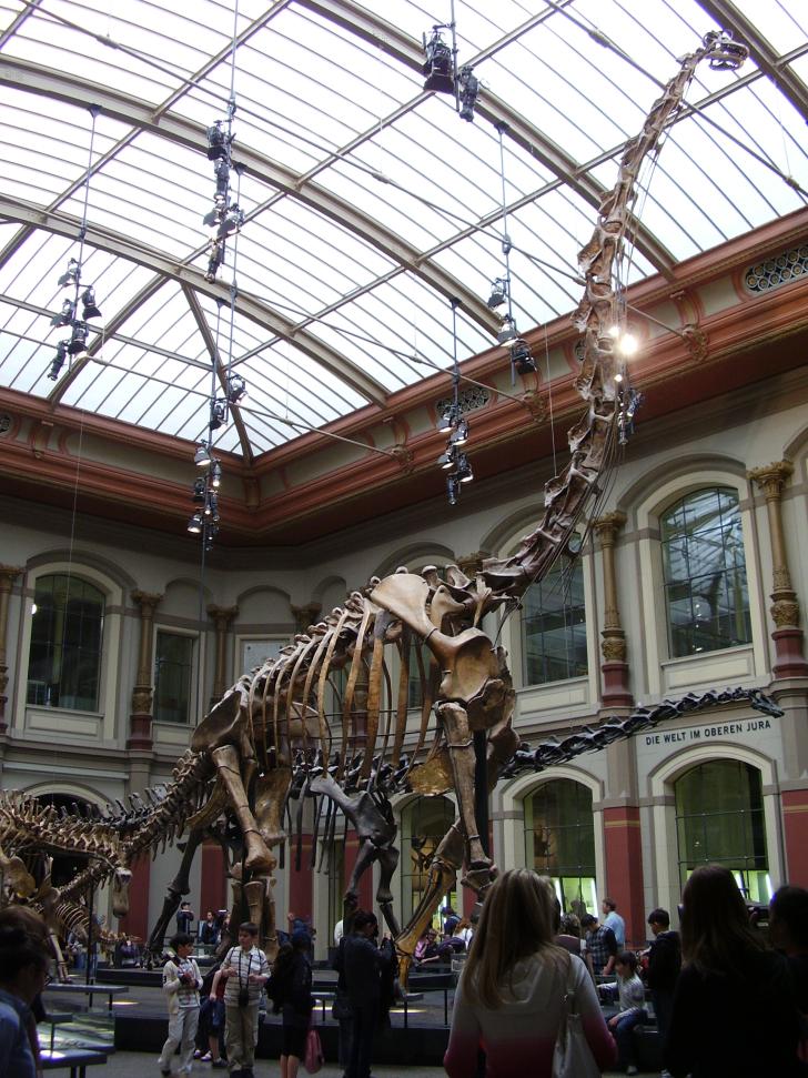 Kostra obřího brachiosaurida, jehož hlava se nachází ve výšce třinácti metrů nad zemí. Zaživa zřejmě tento kolos vážil asi tolik, co osm dospělých slonů. Přesto možná nebyl největším dinosaurem v ekosystémech souvrství Tend