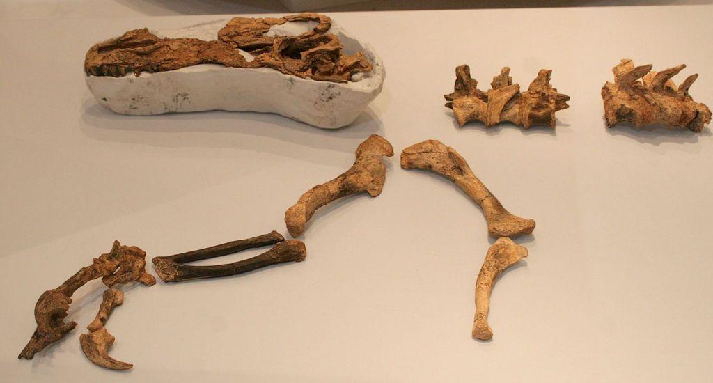 Fosilie holotypu guanlonga, částečně dochovaného dospělého jedince. Zde horní část lebky s fragmentem lebečního hřebene, obratle a částečně zachovaná přední končetina s drápy. Kredit: Kabacchi, Wikipedie (CC BY 2.0)