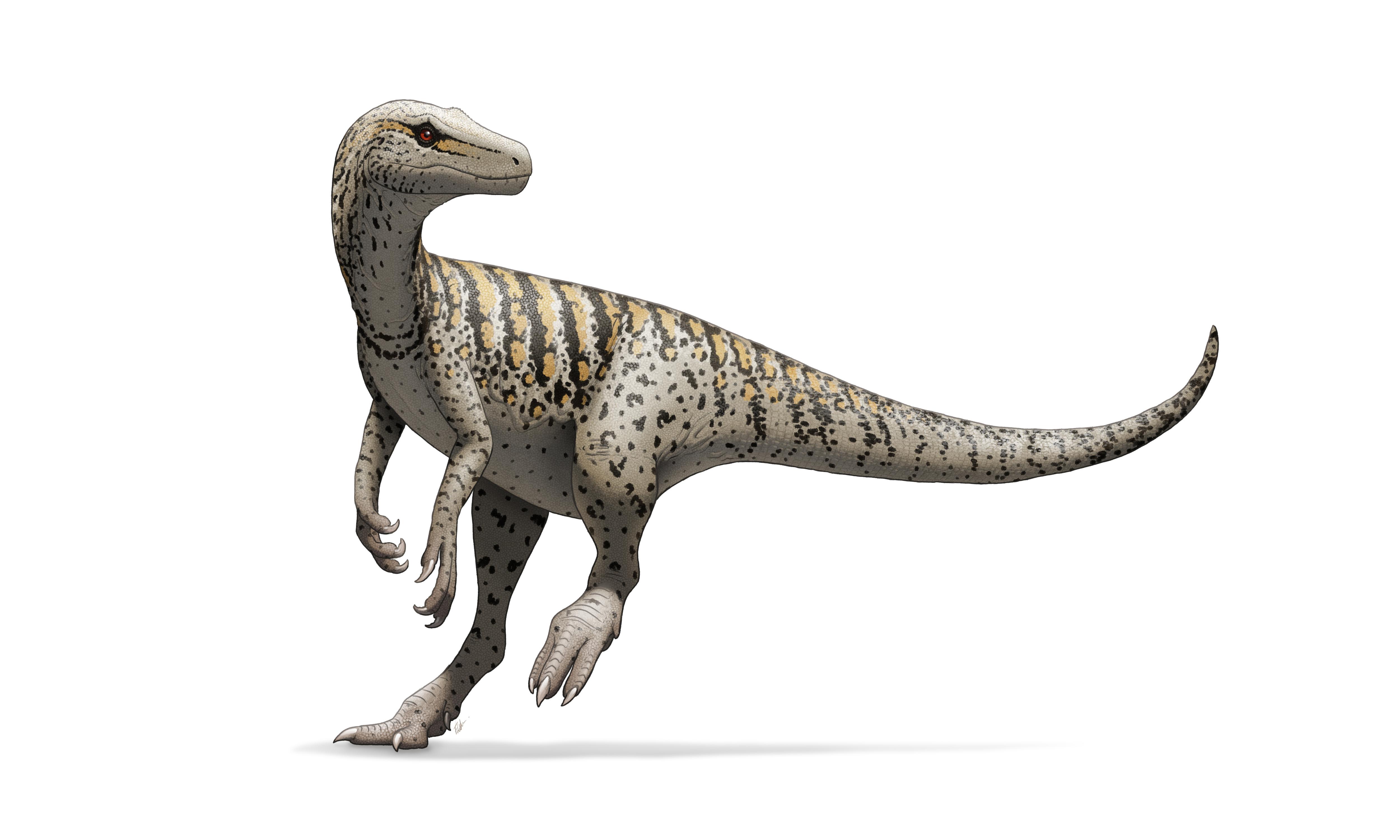 """Podle nové systematiky patří do skupiny Saurischia obvykle """"dlouhokrcí"""" sauropodomorfové a dále herrerasauridi, dříve považovaní za vývojově primitivní teropody. Zde přímo druh Herrerasaurus ischigualastensis, žijící v době před 231 miliony let na úz"""