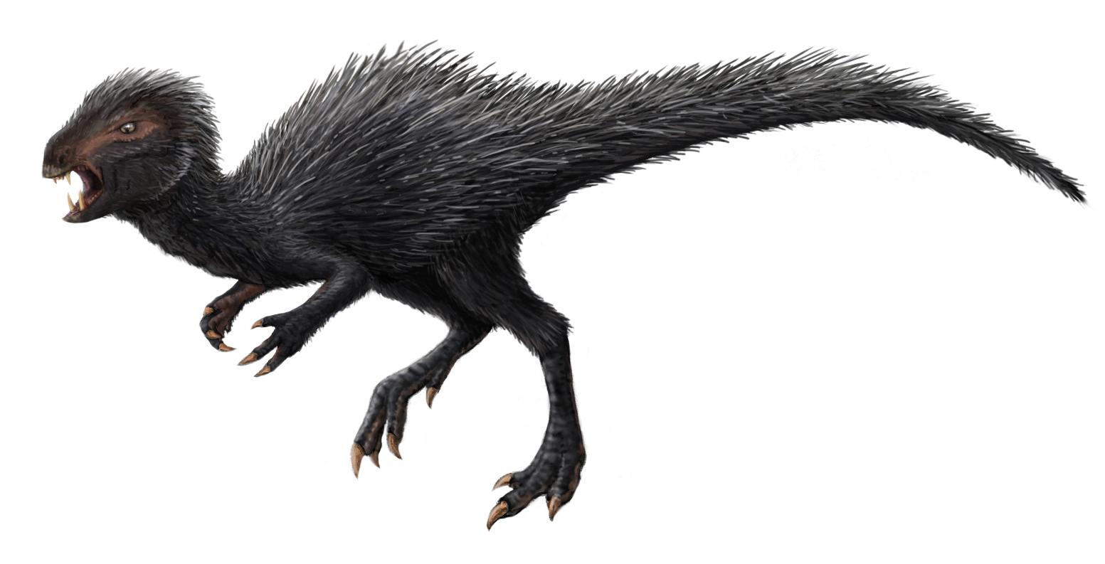 Jistou anatomickou podobnost mezi heterodontosauridy a teropody zaznamenali někteří paleontologové již dříve. Nový výzkum jim teď dává za pravdu, tyto dvě skupiny dinosaurů si mohly být ve skutečnosti blíže příbuzné, než se obecně předpokládalo. Zde