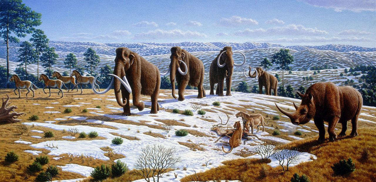 """Pleistocénní megafauna, mezi jejíž nejznámější protagonisty patří mamut srstnatý a jeho """"průvodce"""" nosorožec srstnatý, byla vnímavým Evropanům známá již ve středověku a raném novověku. Ještě však netušili, že se nejed"""