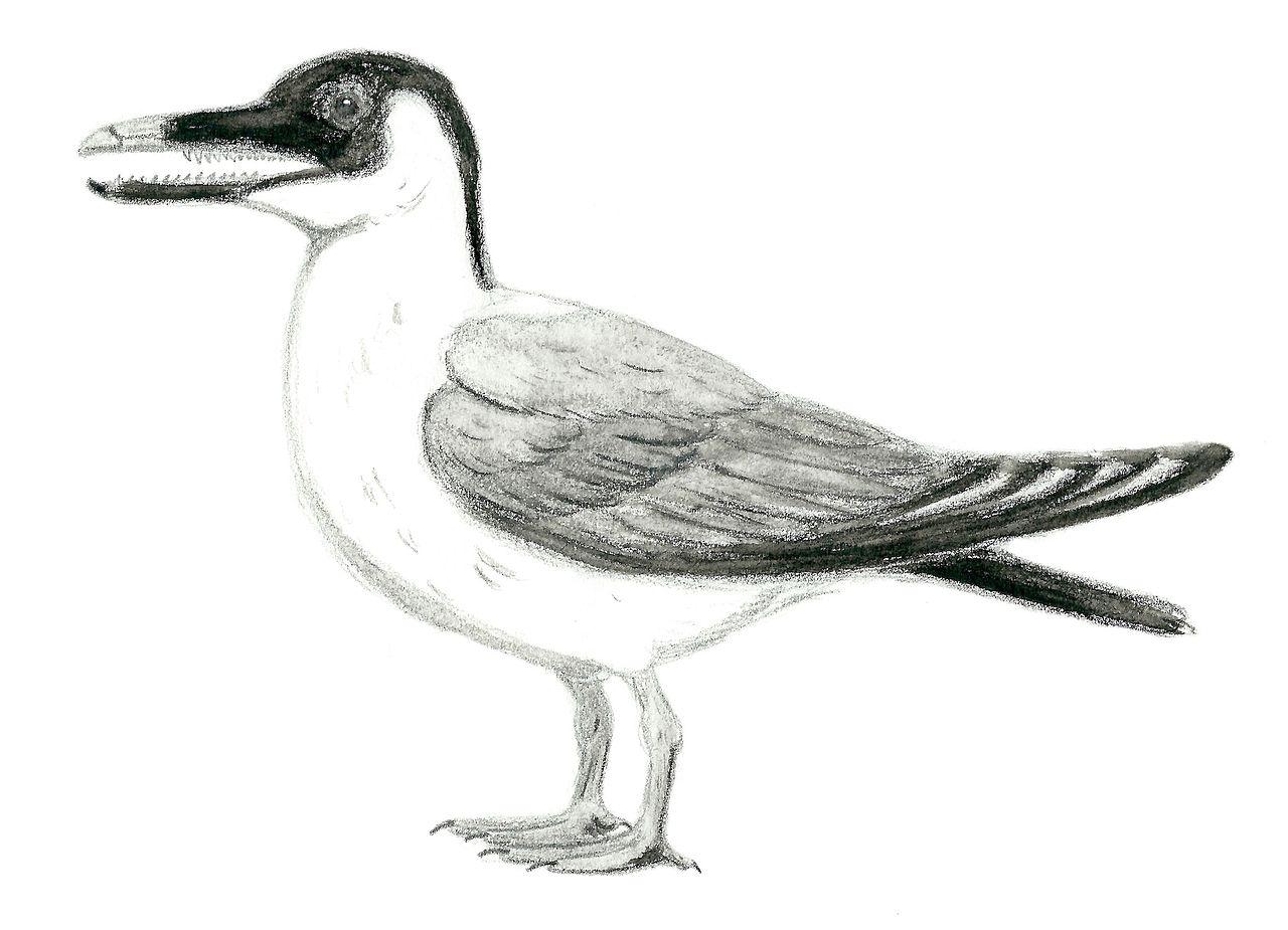 Ichthyornis. Ve své době (pozdní křída) to byl ekvivalent dnešních mořských ptáků. Velký byl asi jako holub ale našli se už i jeho mnohem větší pozůstatky.  Přezdívá se mu rybí pták. Stavbou obratlů se jevil být spřízněn s rybami. Ozubená čelist se n