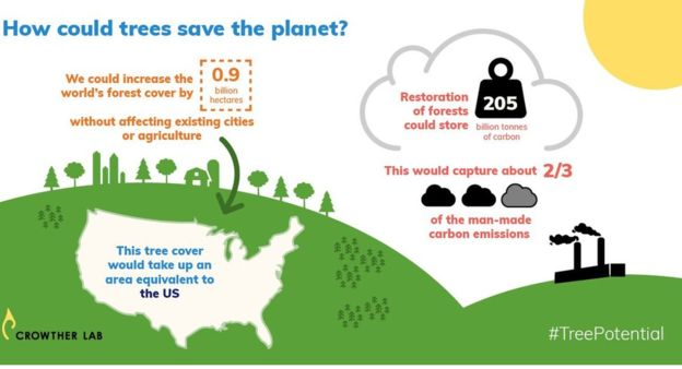 0,9 miliardy hektarů lesa je území velikosti USA. Infografika – crowtherlab.com.
