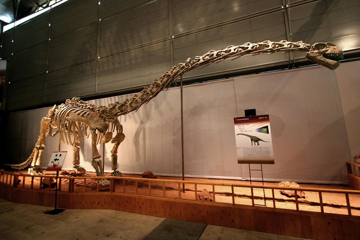 Rekonstruovaná kostra sauropodního dinosaura druhu Klamelisaurus gobiensis, žijícího v době před 162 miliony lety na území dnešní Ujgurské autonomní provincie Sin-ťiang na severozápadě Číny. Tento druh se pravděpodobně vyskytoval i v ekosystémech rep