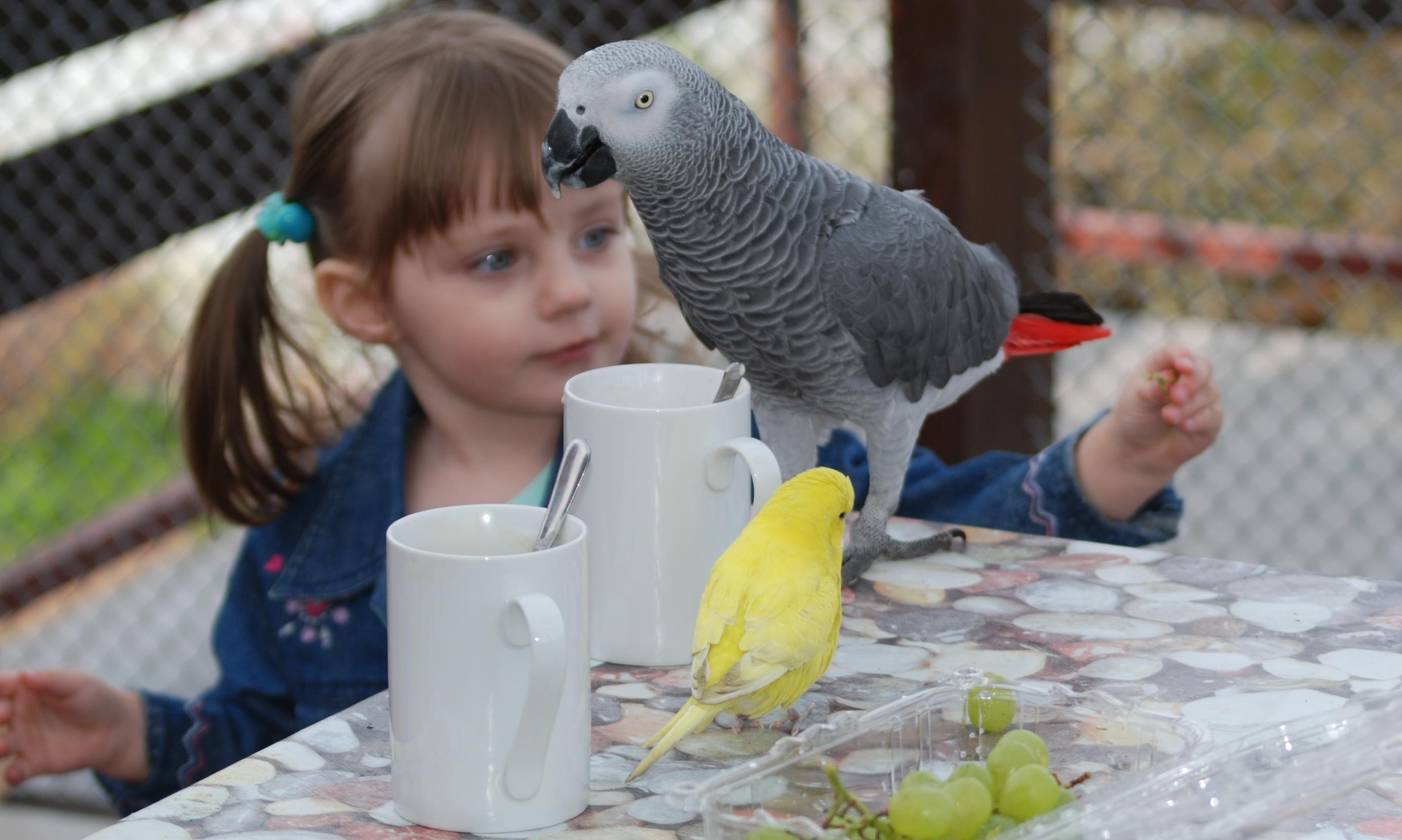 Papoušek šedý – žako(Psittacus erithacus) patří mezi nejoblíbenějšípapoušky. Netuším proč. (Kredit:: autor článku)