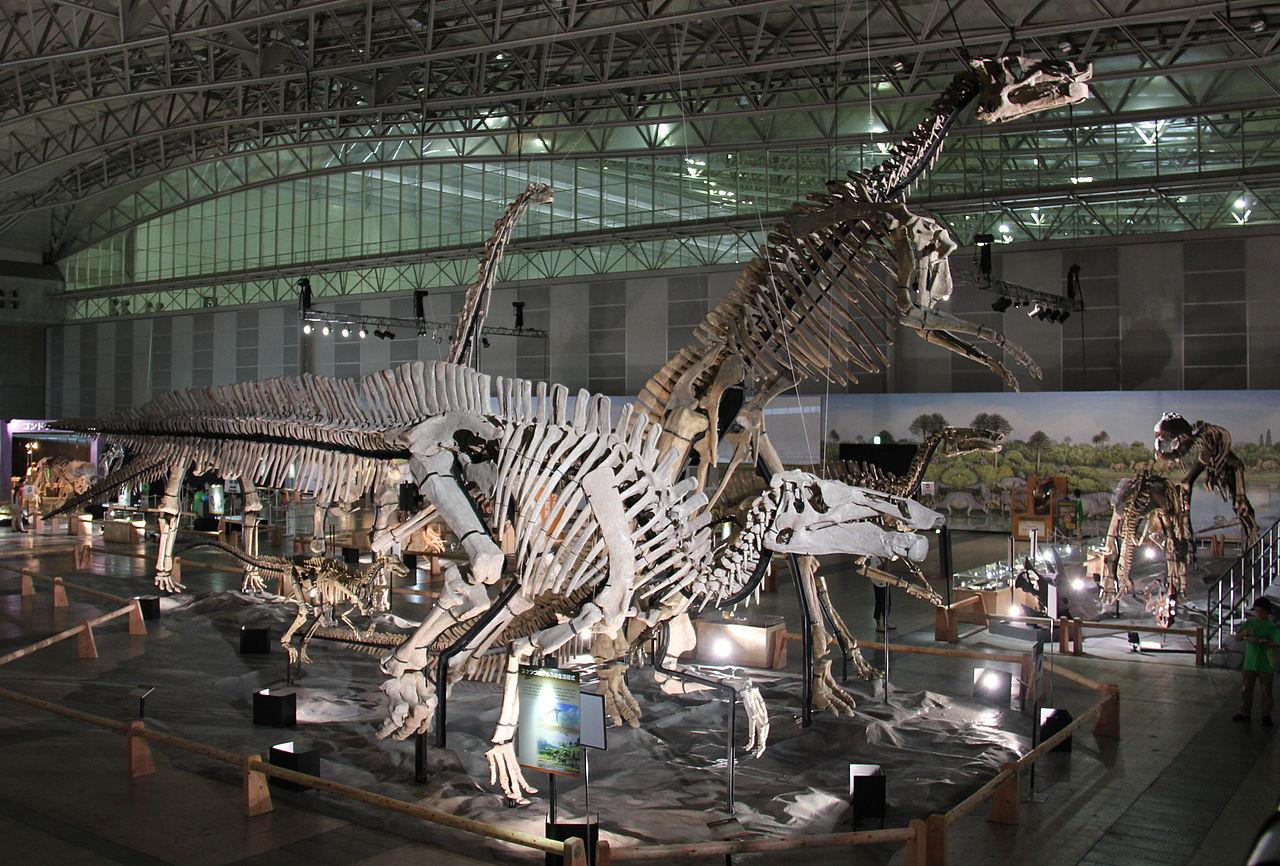 Kostra šantungosaura v popředí výstavy čínských dinosaurů Dino Kingdom v roce 2012. Tento ptakopánvý gigant se velikostí blížil středně velkým sauropodům. Kredit: Laika ac, Wikipedie