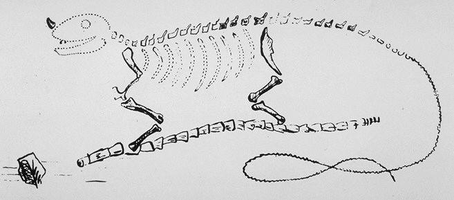 Dnes již slavná Mantellova rekonstrukce iguanodona z roku 1834, zobrazující tohoto dinosaura jako obří obdobu současného leguána. Mantell vytvořil rekonstrukci na základě kompletnějšího fosilního materiálu, dnes známého jako Maidst