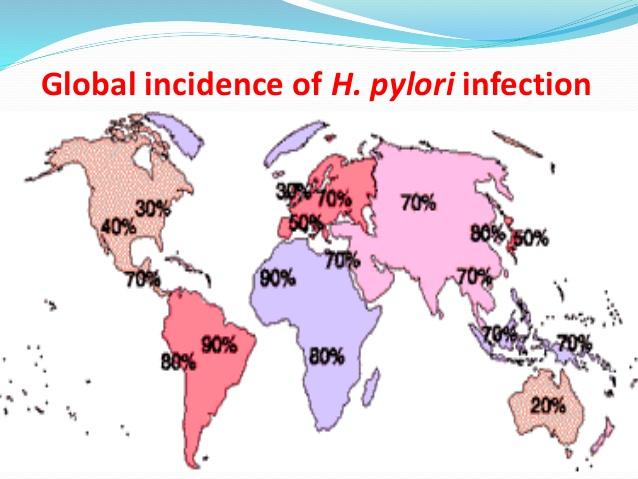 Prevalence H. pylori se pohybuje mezi 80% a 90% v rozvojových zemích a mezi 30 a 50% v rozvinutých zemích. Epidemiologie infekce H. pylori se změnila zavedením hygienických pravidel a medicínských metod eradikace. Zdroj:  www.slideshare.net