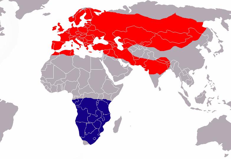Hnízdiště (červeně) a zimoviště (modře) rorýsa obecného. Kredit: Vardion, volné dílo