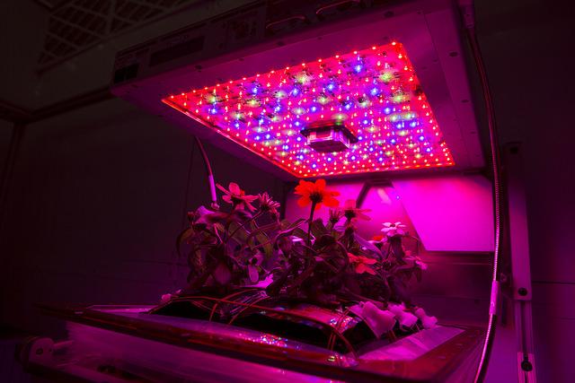 Vedle modře a červeně jsou zeleně emitující diody zahrnuty v konstrukci zařízení pro kultivaci rostlin, se kterým experimentuje NASA pro zamýšlenou produkci potravin v mimozemských zahrádkách. Obrázek ukazuje pozemský pokus v Kenedyh