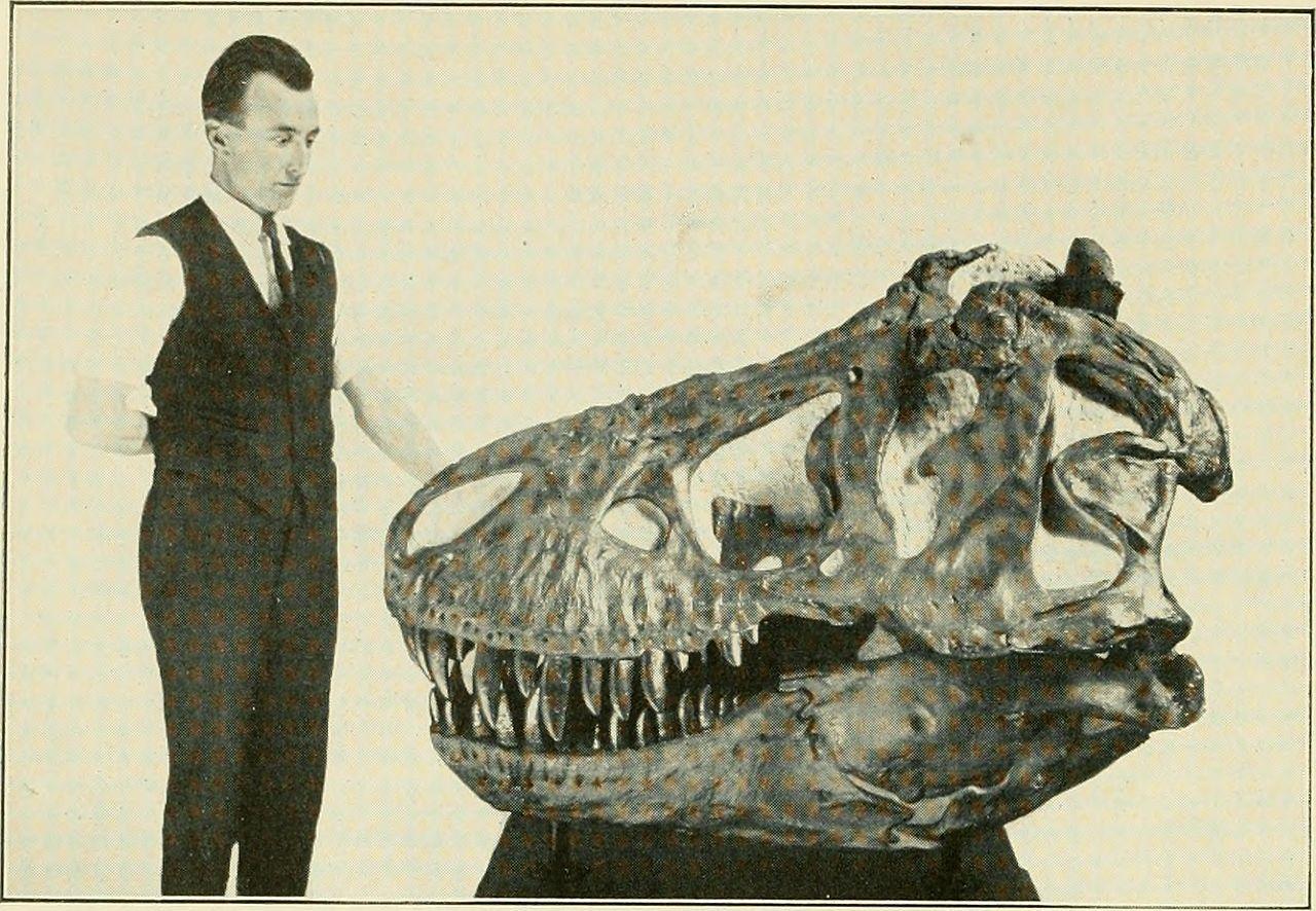 Obří lebky prvních objevených tyranosaurů ukrývaly podle domněnek paleontologů ze začátku 20. století pouze malé a nepříliš výkonné mozky. Teprve s novými objevy a nástupem moderních technologií se ukázalo, že pravda je poněkud jiná. Tyranosauři neby