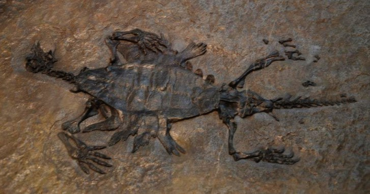 Kostra čínského triasového druhu Odontochelis semitestacea, jedné z nejstarších známých fosilních želv. Výzkum ukazuje, že poslední společný předek ptáků a želv žil na Zemi v období permu, asi před 260 miliony let. Kredit: Ghedoghedo, Wikipedie (CC B
