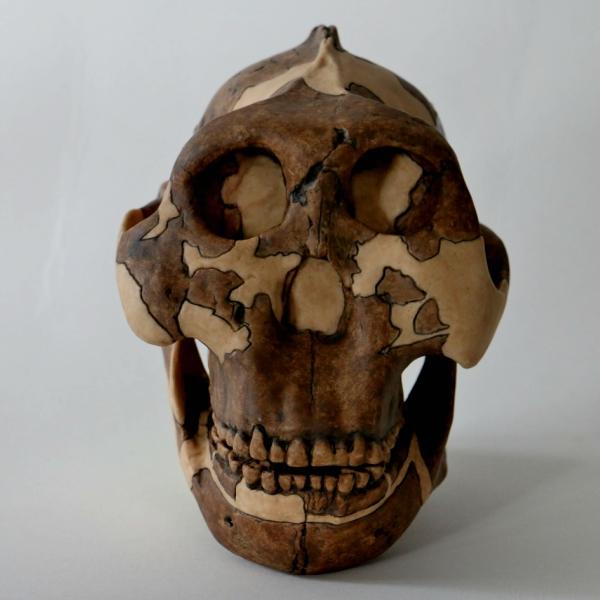 Dostali jsme genitální opar od tohoto fešáka? Kredit: Louise Walsh / University of Cambridge.