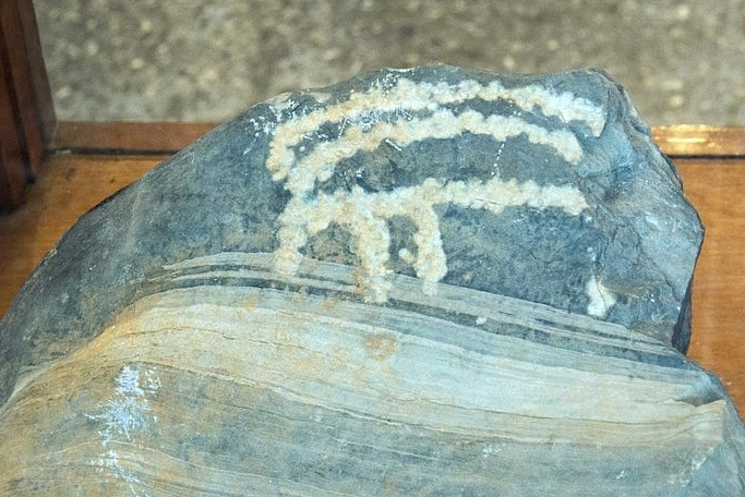Kozorožec? Kredit: Zde, Wikimedia Commons