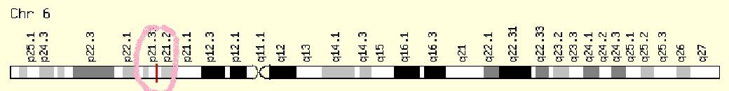 Člověk má také gen PPARD kódující membránový protein (Peroxisome proliferator-activated receptor delta)se stejnými funkcemi jako u myší. Rozdíl je jen v tom, že u nás ho máme na šestém chromozomu.