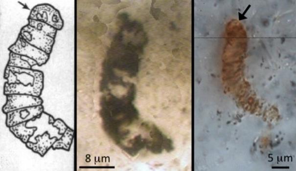 Waceyho tým transmisní elektronovou mikroskopií dokládá, že nejde o památku po buněčných stěnách. Žádný výsledek množení buněk, nýbrž o struktura vzniklá krystalizací fylosilikátů. Kredit: Wacey, UWA.