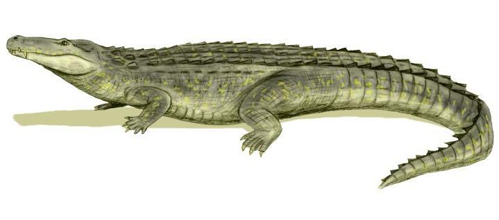Rekonstrukce přibližného vzezření obřího aligatoridního krokodýla z podčeledi Caimaninae, miocénního druhu Purussaurus brasiliensis. Při délce 10 až 12,5 metru a hmotnosti 5 až 8,5 tuny patřil k největším krokodýlovitým plazům všech dob. Kredit: Nobu