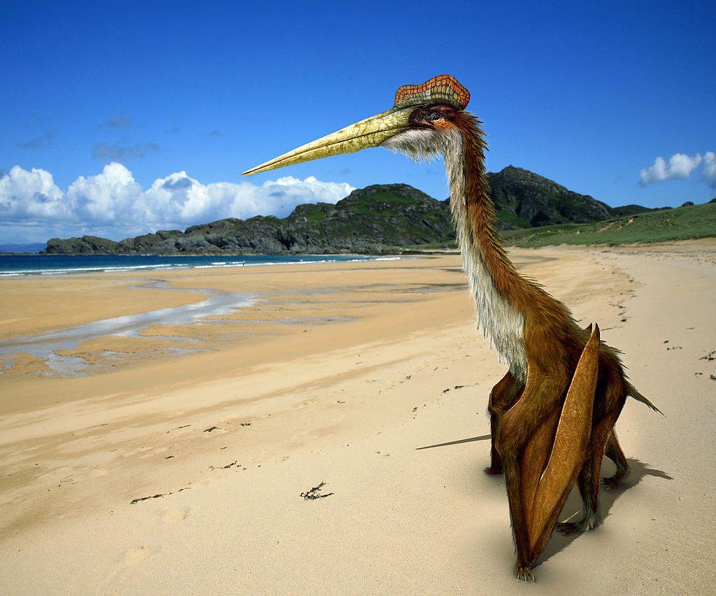 Pterosauři obřího roduQuetzalcoatlus. Rekonstrukce Johnson Mortimer