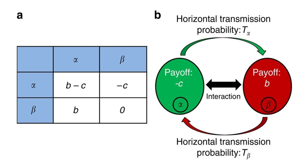 Schema matematického modelu. Vlevo: Matice přínosu. Vpravo: Pravděpodobnost horizontálního přenosu mikrobů mezi hostiteli. Je pravděpodobné, že mikrobi na své hostitele působí tak, že začnou pomáhat jiným. Jde o vztah, ze kterého těží i další parazit