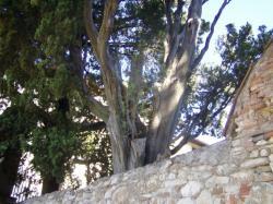 Pínia na cypruse 11.9.2001