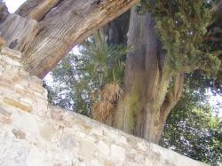 Palmička na cypruse 11.9.2001