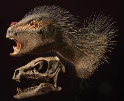 """Lebka a detailní model hlavy a krku heterodontosaurida druhu Heterodontosaurus tucki. Tento malý dinosaurus, žijící v období spodní jury na území současné jižní Afriky, byl formálně popsán v roce 1962. Dnes díky objevu čínského druhu Tianyulong confuciusi předpokládáme, že všichni heterodontosauridi mohli být do určité míry vybaveni vláknitým tělesným pokryvem (""""proto-peřím""""). To mohlo mít na některých částech těla podobu jakýchsi """"štětinek"""", jak naznačuje i model na obrázku. Kredit: Tyler Keillor a Sereno, P. C. (2012); Wikipedie (CC BY 3.0)"""