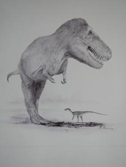 Tyto dva dinosaury (druhy Eoraptor lunensis a Tyrannosaurus rex) dělí zhruba 165 milionů let geologického času. Podle některých výzkumů byli dinosauři na výrazném evolučním ústupu už nejméně deset milionů let před koncem křídy, jasno ale v této záležitosti stále nemáme. Kredit: Vladimír Rimbala, ilustrace k autorově knize Legenda jménem Tyrannosaurus rex (nakl. Pavel Mervart, 2019).