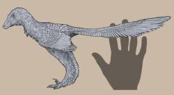 Rekonstrukce celkového vzezření, tvaru těla a struktury opeření u druhu Caihong juji. S délkou 40 centimetrů a hmotností necelého půl kilogramu patří tento anchiornitid k nejmenším známým neptačím teropodům. Kredit: Tomopteryx, Wikipedie (CC BY-SA 4.0)